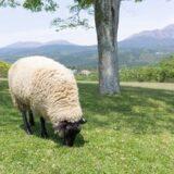 【新発見】周りが見えなくなって、自分がオンリーワンな牡羊座【ホロスコープ】