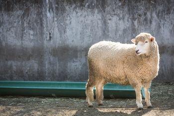 牡羊座の運勢 男性 女性
